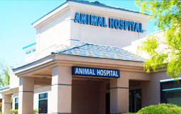 Welcome to South Shores Animal Hospital